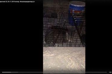 Активисты спасли кошку изподвала наКирочной улице