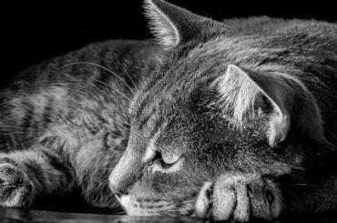 Минстрой запретит замуровывать кошек вподвалах