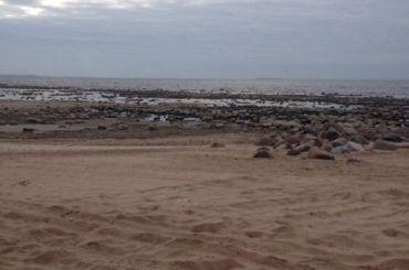Петербуржцы бьют тревогу из-за обмелевшего Финского залива
