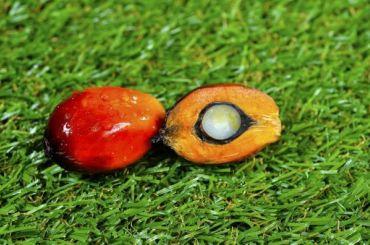 Пальмовое масло станет дороже в2020 году