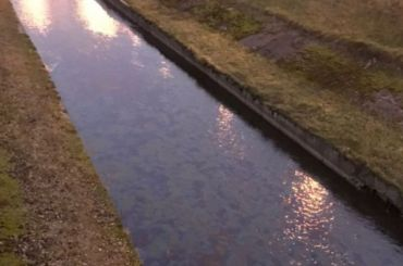 Поверхность реки Волковки покрылась радужной пленкой