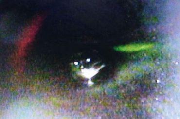 Спасатели вытащили котенка изтрубы наПолюстровском