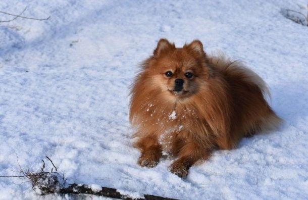 Названа самая популярная порода собак уроссиян