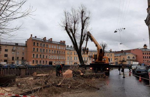 Власти собираются спилить старинные тополя наГрибоедова