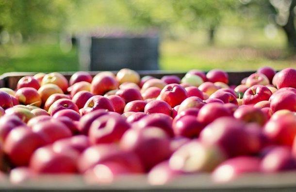 Финляндия запретила ввоз овощей ифруктов изРоссии