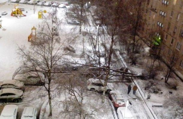 Ветер повалил несколько деревьев наюге Петербурга
