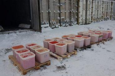 Пять тонн красной икры сожгли вПетербурге