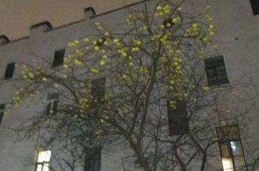 Вдекабре обнаружили дерево, обвешенное яблоками