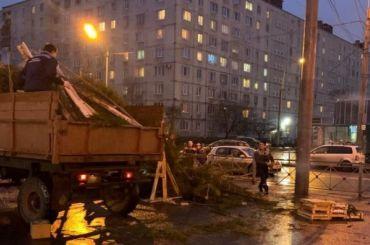 Незаконный елочный базар ликвидировали вКупчине
