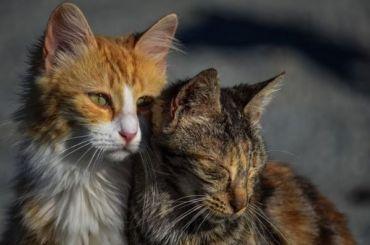 Бездомных животных могут начать отправлять вдома престарелых