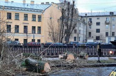 Вишневский: Экспертиза показала, что тополя наканале Грибоедова впорядке