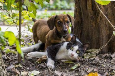 Четырбоку предложили объединить дома престарелых сприютами для животных