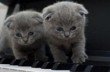 Четыре кошки вернутся вкафе, где ихзапирали