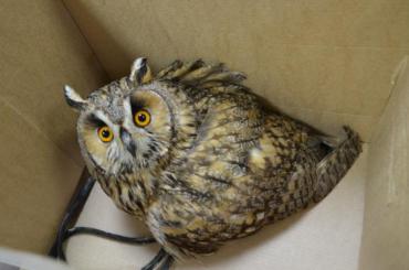 Загод вПетербурге спасли 12 диких животных
