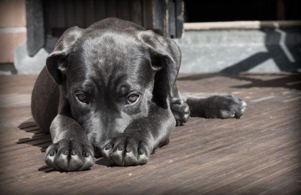 ВПулково орнитолог застрелил собаку