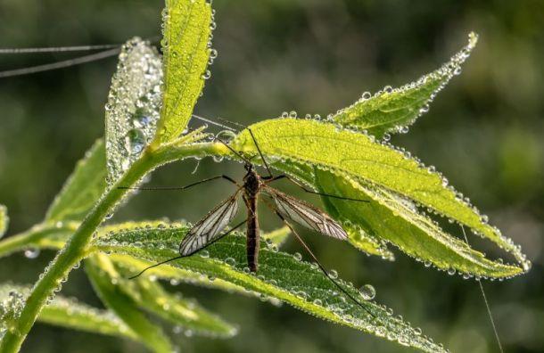 Экологи бьют тревогу: аномально теплая зима повлияет нанасекомых