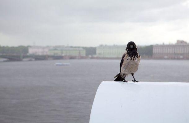Петербуржцев предупреждают оштормовом ветре идождях