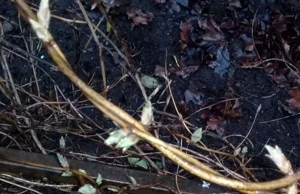 Петербуржцы заметили вянваре первые весенние цветы