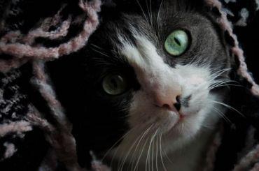 Загод зооактивисты спасли вПетербурге 900 кошек и40 собак