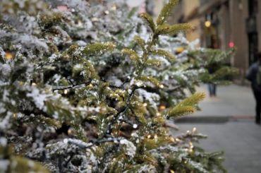 Петербуржцев просят сдать новогодние елки наутилизацию