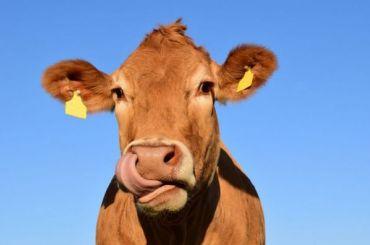 Мясо имолоко в2020 году могут подорожать на10−12%