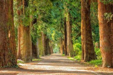 Депутаты поддержали законопроект осохранении зелени при рубке деревьев