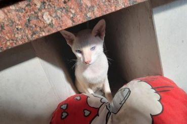 Коты погибли после полета нарейсе «Аэрофлота»