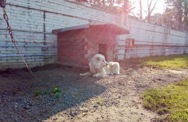 «Водоканал» хочет избавиться отсвоих сторожевых собак