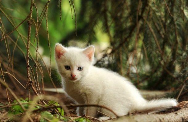 Праздник белых кошек отметят 31января