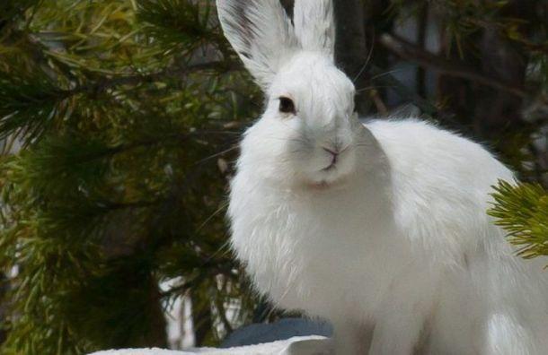 «Благо или зло»: как животные переносят аномально теплую зиму вПетербурге