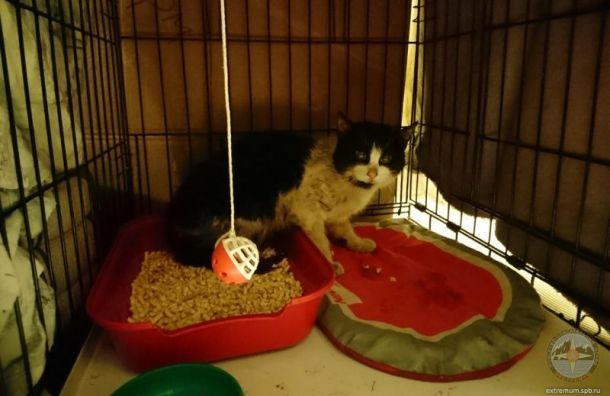 Застрявшего надереве кота приютили вЭрмитаже