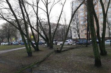 Жертвами шторма вПетербурге стали три десятка деревьев