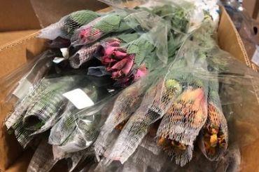 Вместе сколумбийскими цветами вПетербурге завезли опасных насекомых