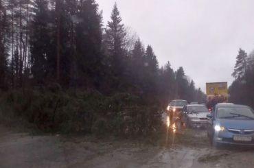 Шторм срывает крыши, валит деревья идвигает машины вПетербурге