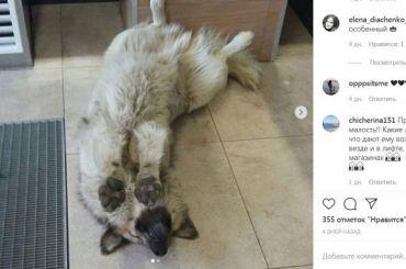 Лучшей собакой России признали бездомного пса Кефира изСоснового Бора
