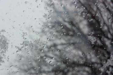 Синоптики обещают вПетербурге вовторник дожди иплюсовую температуру