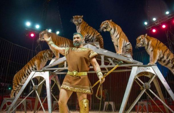 Артисты итальянского цирка Togni поблагодарили правительство России