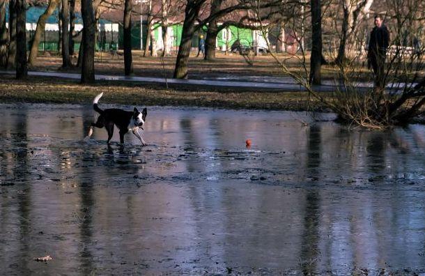 Петербуржцев ожидает мокрый снег идожди
