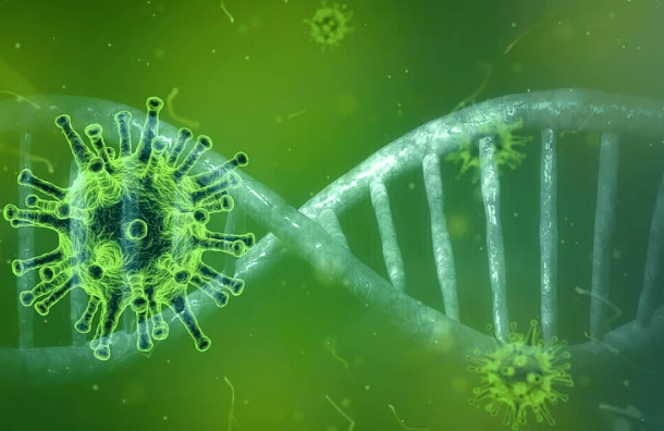 Специалисты петербургского НИИгриппа расшифровали геном коронавируса