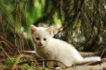 Библиотека «НаСтремянной» организовала благотворительную акцию для кошек