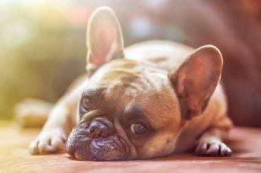Депутат Госдумы назвал бредом идею ввести налог надомашних животных