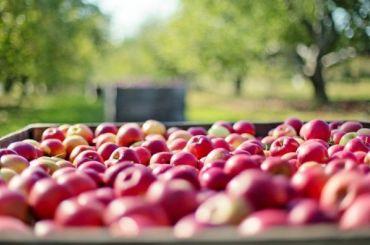 Импортные яблоки подорожали из-за падения рубля