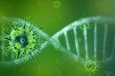 Более 500 человек вКНР получили вакцину входе клинических испытаний