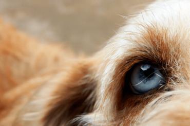 Выбросивший собаку изокна бывший кинолог пойдет под суд