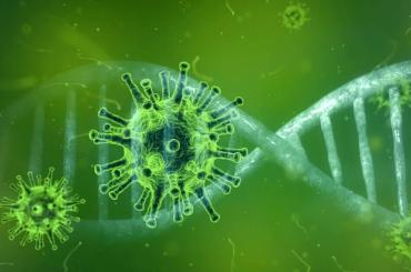 Алтай стал последним регионом России, где обнаружили коронавирус
