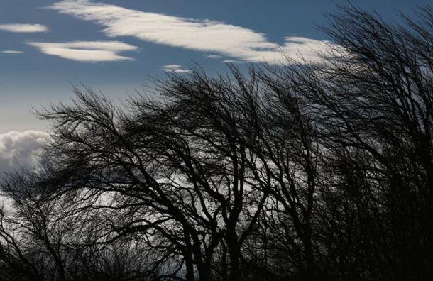 МЧС предупреждает: вПетербург идет шквальный ветер