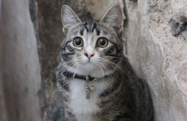 ИзАнненкирхе сбежал кот-смотритель