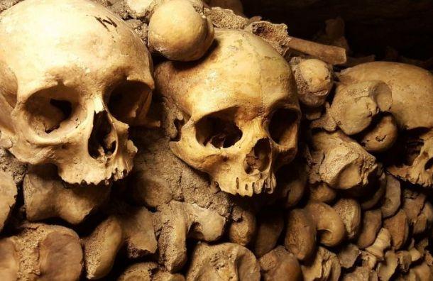 Следователи обнаружили человеческие кости, закопанные около Экспофорума