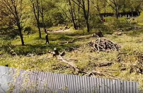 ВЮжно-Приморском парке начали вырубать дервья вместе, где должен быть сквер