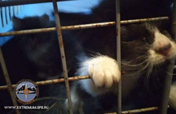 Двух застрявших ввентиляции котят спасли вЛенобласти